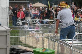 Queens County Fair