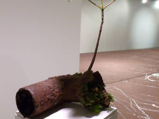 ('Avocat', 1997 et 'Lâcher d'escargots sur moquette marron' (détail), 2009 / © TB - Time Out)