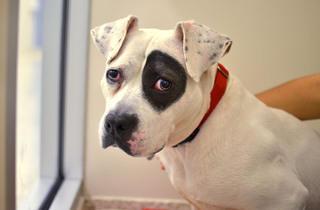 (Photograph: Courtesy the ASPCA)