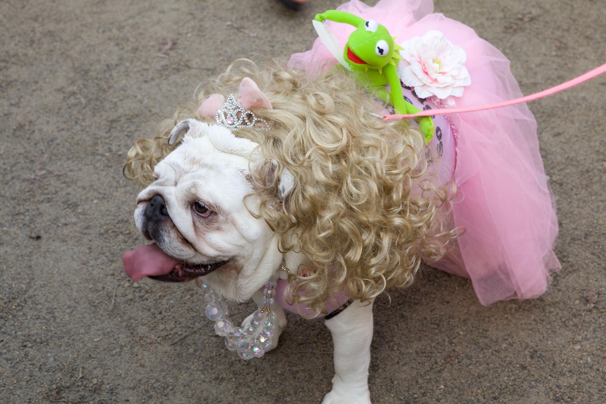 Tompkins Square Park Halloween Dog Parade (2012)