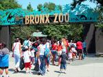 The Bronx, Bronx Zoo, borobash