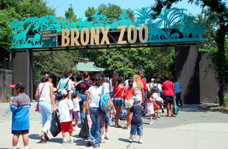 Lucky Diaz and the Family Jam Band at Bronx Zoo