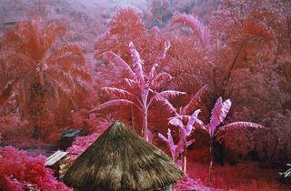 ('Come Out' / © Richard Mosse)