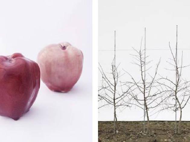 Jessica Rath: Take Me to the Apple Breeder