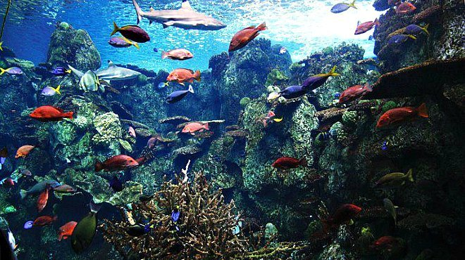 Thanksgiving Lunch at the Aquarium of the Pacific