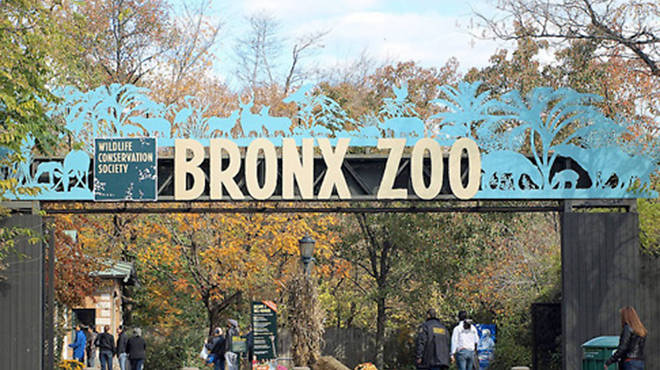 Top attractions in the Bronx