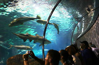 L'Aquàrium (© Olivia Rutherford / Time Out)