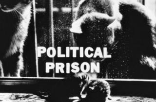 Joyce Wieland. Política i patriotisme