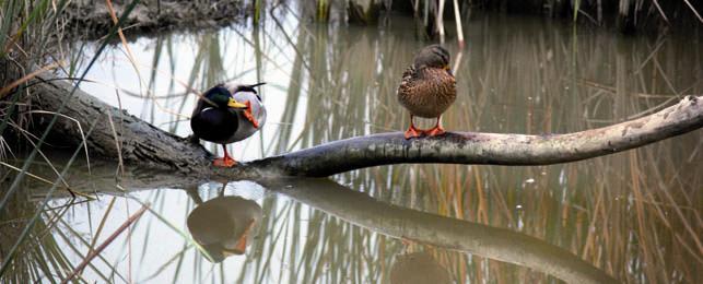 ambnens_ocells_c.jpg
