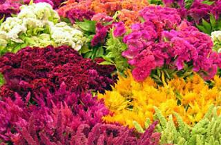 Original LA Flower Market