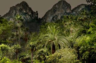 (Olivia Lavergne, 'Jungles' / © Olivia Lavergne)
