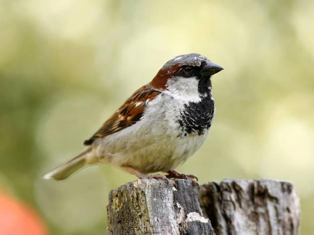 Horniman Museum's Big Garden Birdwatch