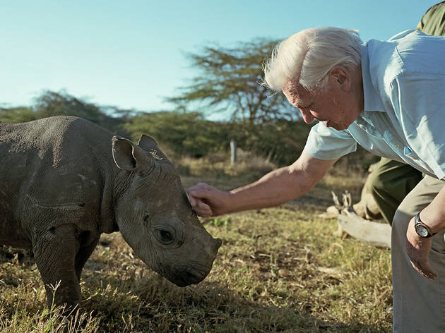 Africa, David Attenborough