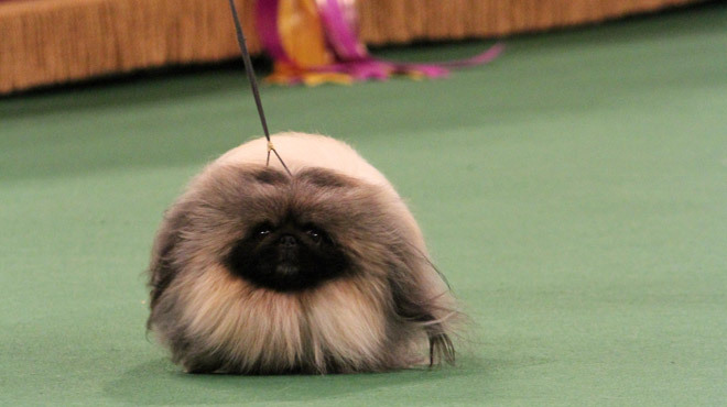 Go behind-the-scenes at the Westminster Kennel Club Dog Show
