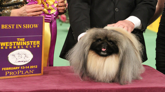 The 137th Annual Westminster Kennel Club Dog Show 2013