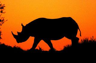 Natural World: Flight of the Rhino