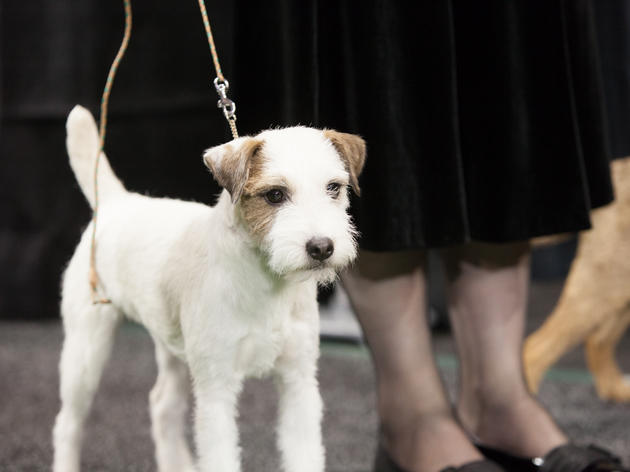 137th Annual Westminster Kennel Club Dog Show, 2013
