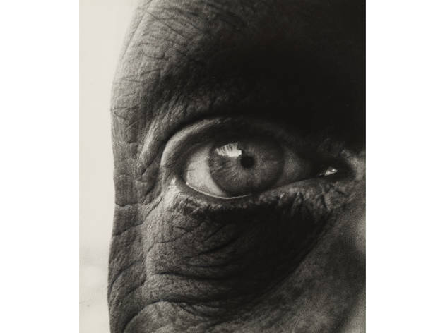 (Photograph: Thomas Griesel)