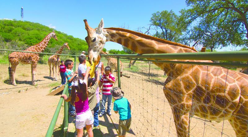 Parques y safaris para niños en la CDMX
