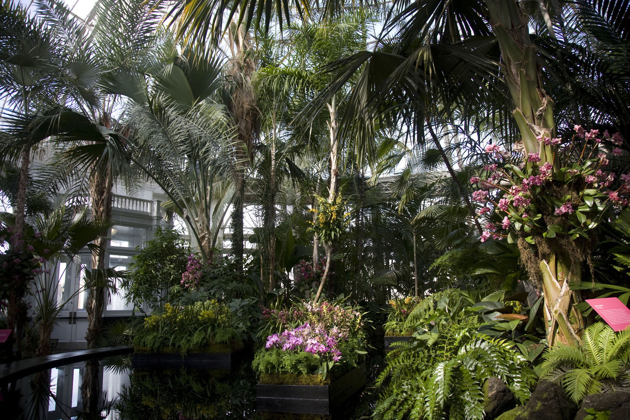 The Orchid Show New York Botanical Garden Museums In New York