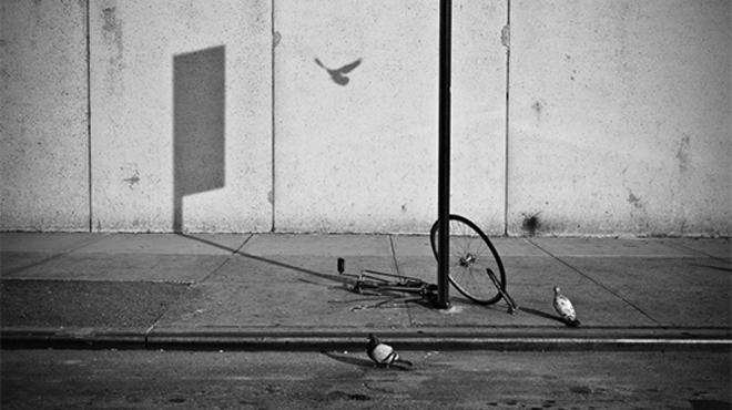 Abandoned bike and flying pigeon.