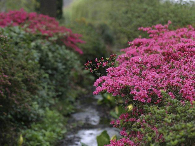 The Isabella Plantation