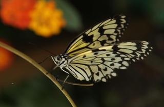 Metamorphosis: The Science of Change