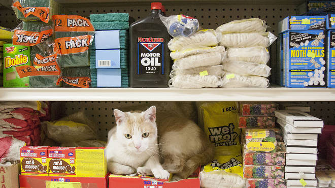 Will a bodega cat be the next star of the Internet Cat Video Festival? Maybe!