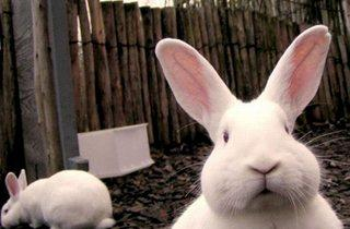 Pop-Up Easter Petting Zoo