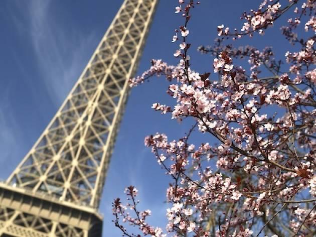 Eiffel Tower, Paris in spring