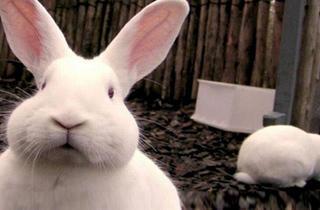 Big Bunny's Spring Fling