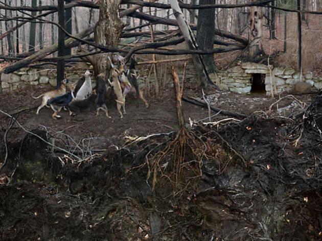 ('Dead tree', 2005, extrait de la série 'Shelter' / Courtesy de la galerie Particulière / © Anthony Goicolea)