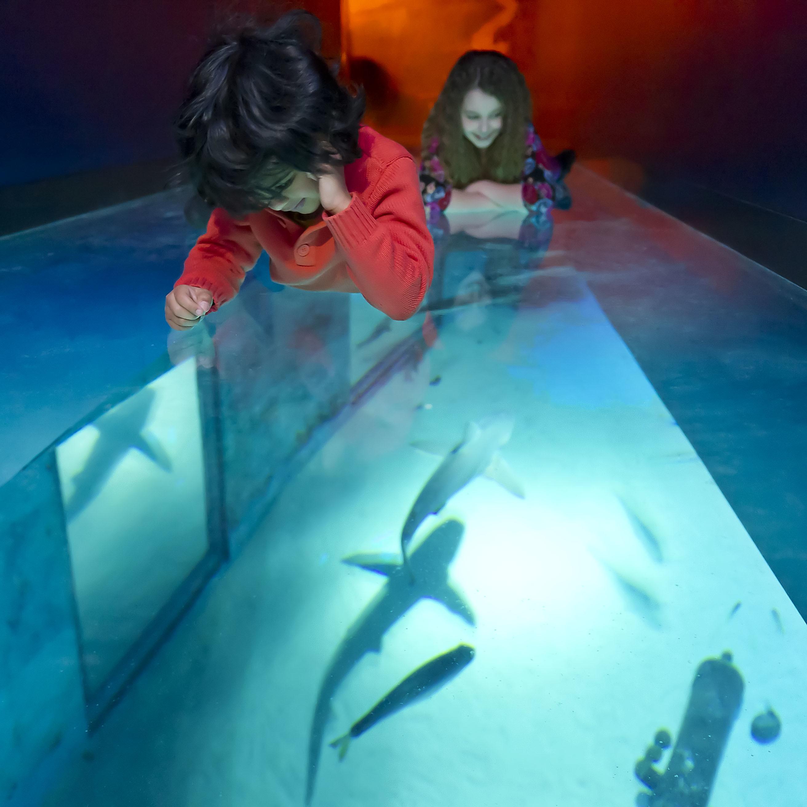 Shark Walk at SEA LIFE London Aquarium
