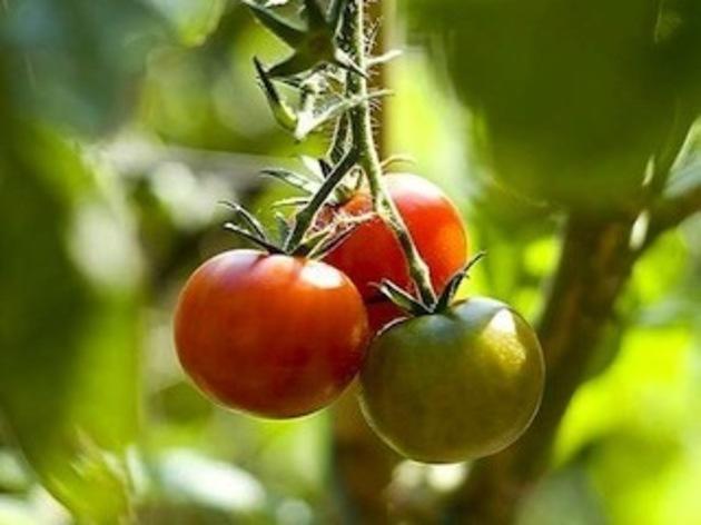 Ramasser ses fruits et légumes aux vergers de Champlain