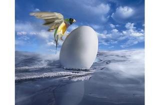 Eggbird  (© FIPC 2012 - Ryszard Horowitz)