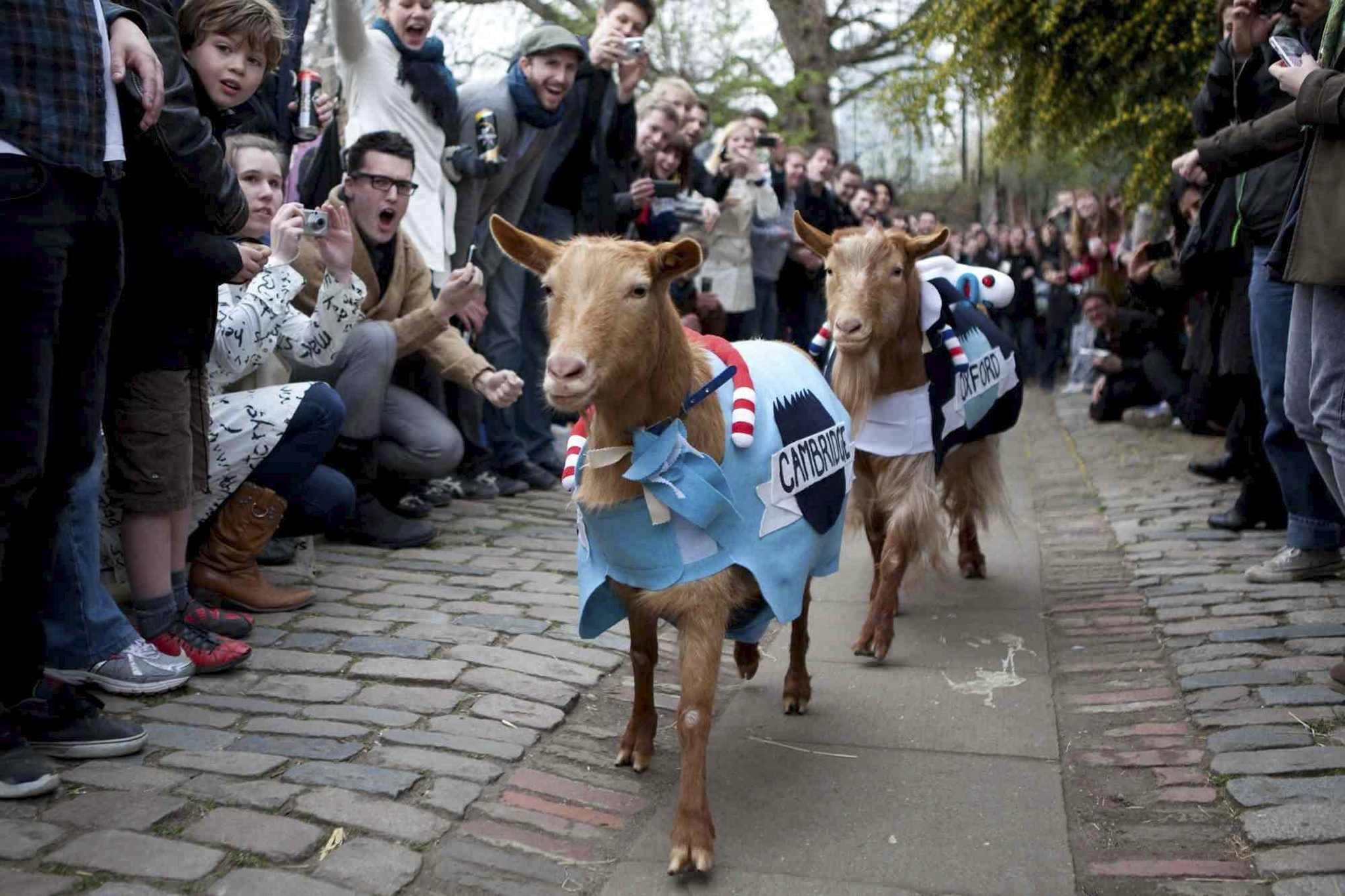 The Oxford and Cambridge Goat Race