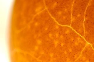 Calotte solaire (© FIPC 2012 - Andrea Maia)