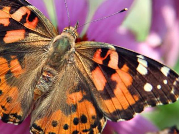 17th Annual Grand Butterfly Release