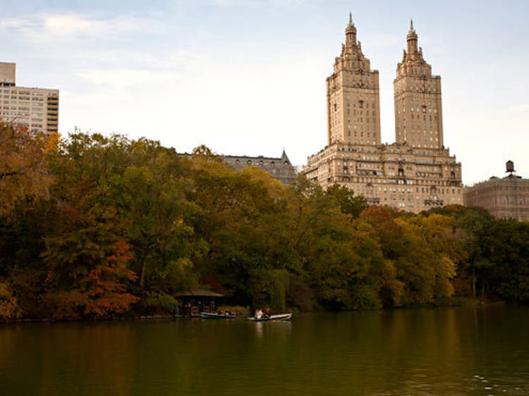 Seek out birds in Central Park