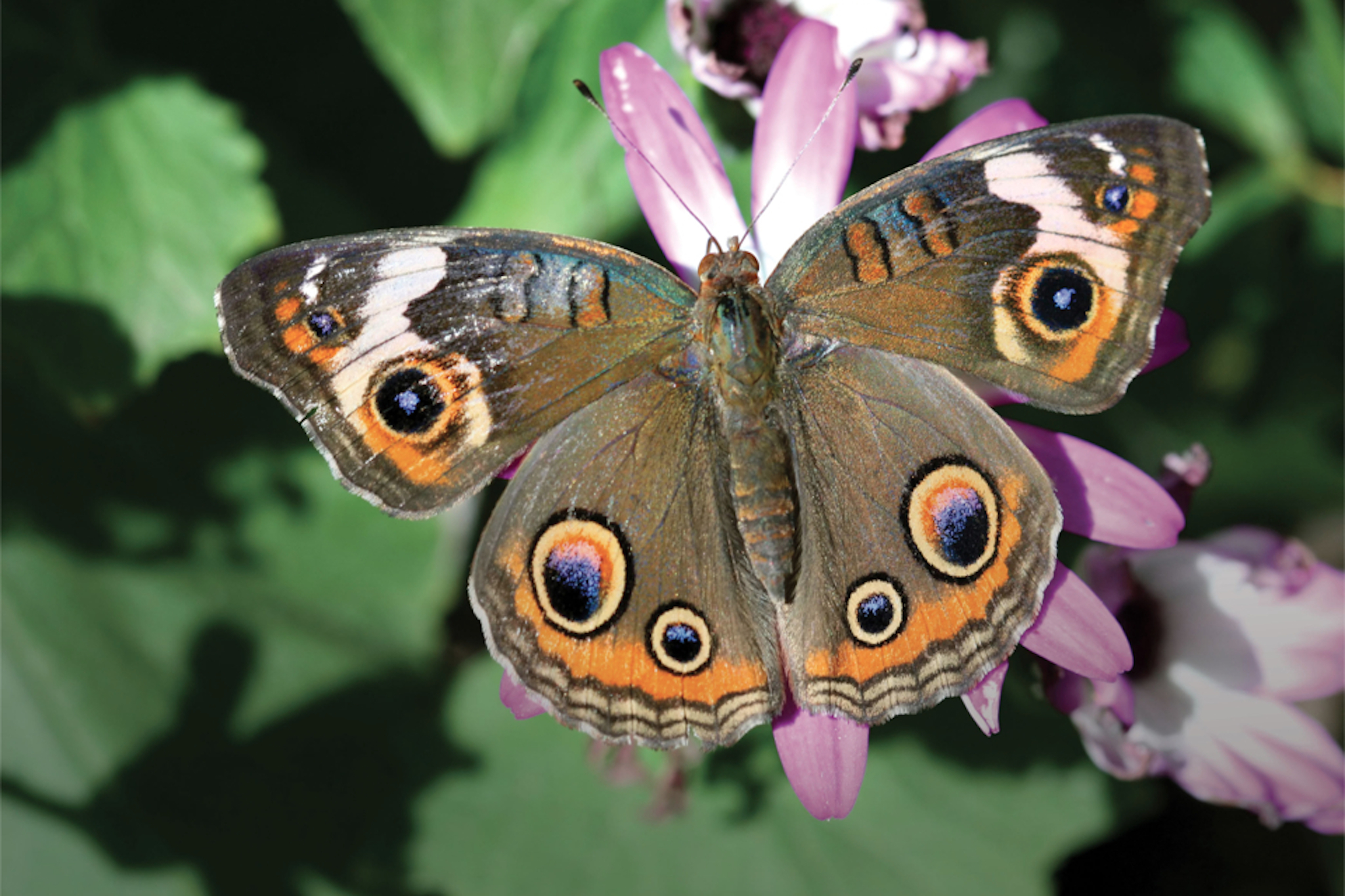No Butterflies on a First Date