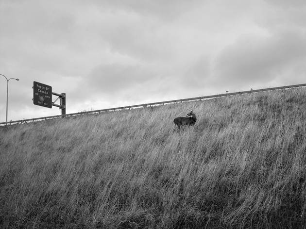 ('Deer on highway embankment', Buffalo, New York, 4 novembre / © Vanessa Winship/Vu)
