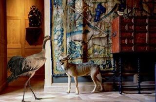 Musée de la Chasse (Karen Knorr)