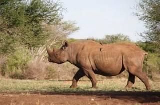 Rhino Mayday