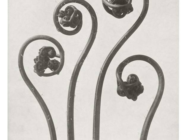 Karl Blossfeldt: Art Forms in Nature
