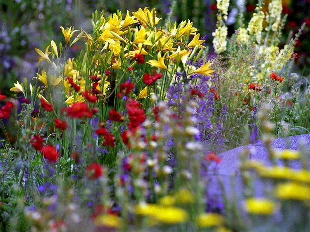 Rhs chelsea flower show things to do in london - Royal flower show ...
