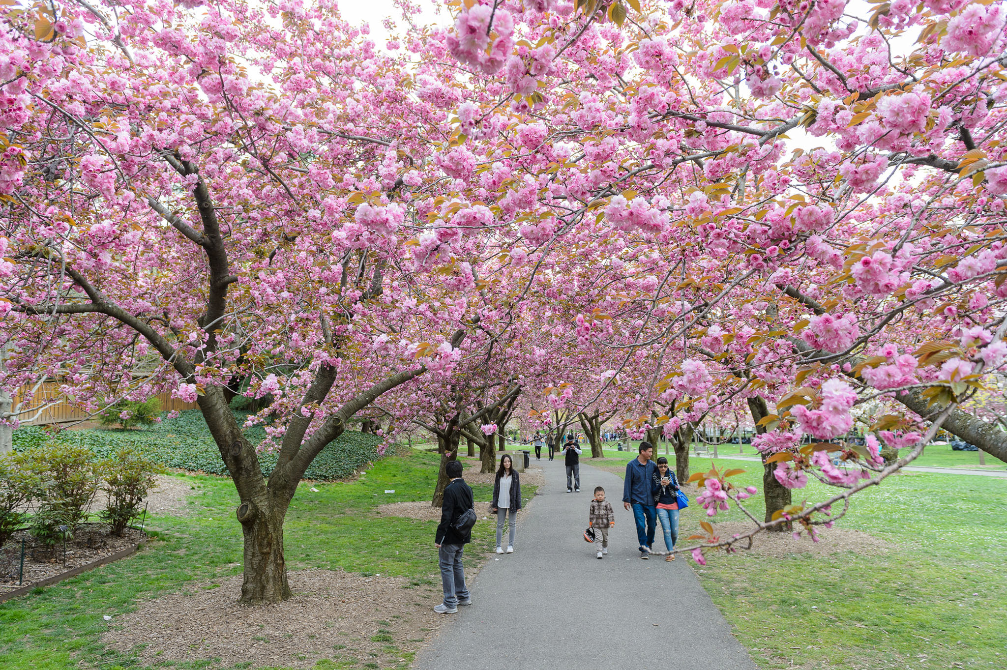 The best things to do in spring in NYC