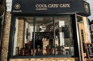 Cool Cat's Café