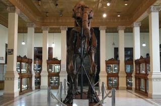 Museo de Geología (Foto: Wally Bonanza)