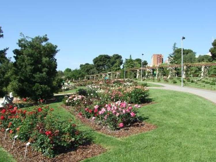 Oler las rosas del Parque Cervantes