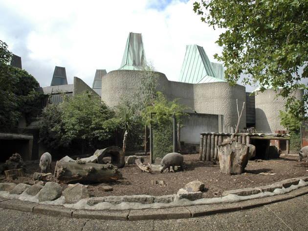 London Zoo warthogs enclosure